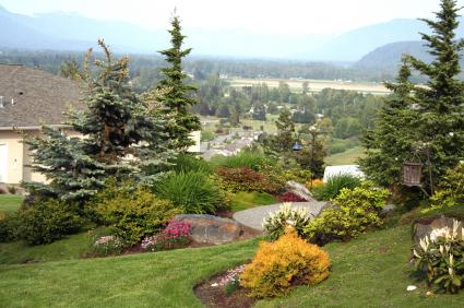 Pictures of different types of evergreen shrubs lovetoknow for Types of bushes for landscaping