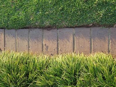 Brick garden edging.