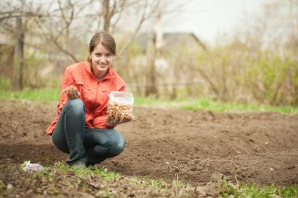 woman planting onions