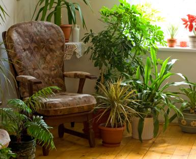 chair surrounded by plants