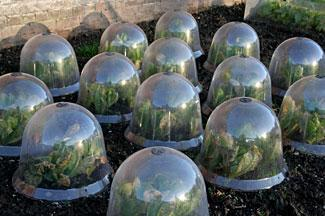 Incroyable Cloches Protect Your Plants