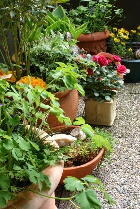 Terra cotta container garden