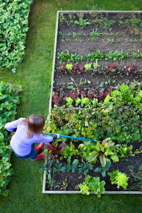 Woman Working On A Raised Bed Vegetable Garden