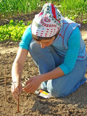 Plant free seeds in your existing garden.