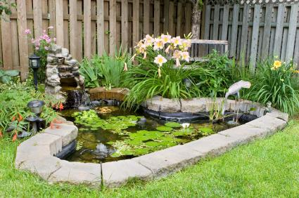 backyard pond with plants