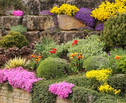 Plants to use in rock gardens lovetoknow for Garden shrubs