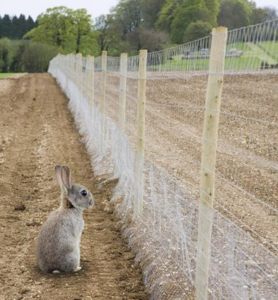Rabbit proof garden fencing lovetoknow - How to keep rabbits out of a garden ...