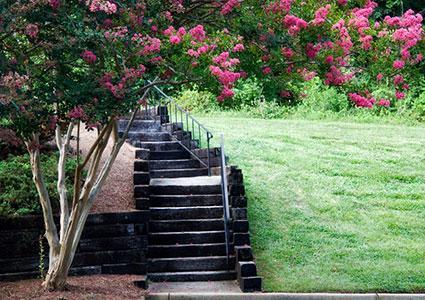 Crepe Myrtle - Best Backyard Shade Trees LoveToKnow