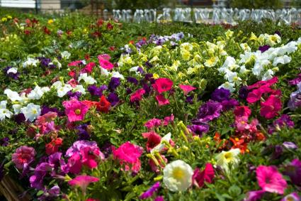 Annual flower beds reduce grass.