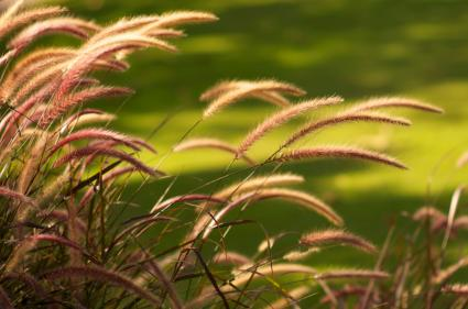 grasses in sunlight