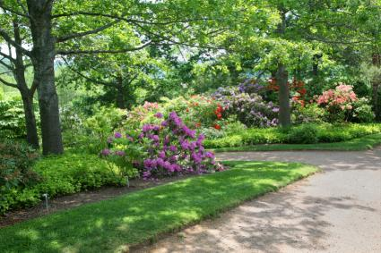 forest garden with azaleas