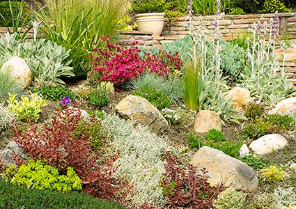 rock garden with perennials
