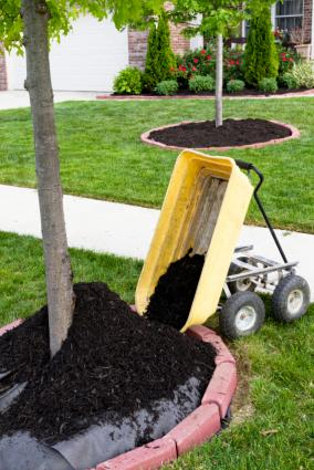 mulching around tree