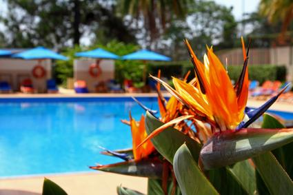 bird of paradise poolside