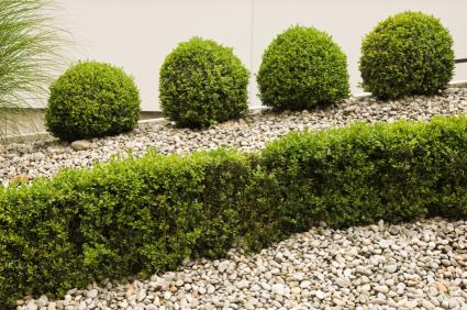 shrubs with stone mulch