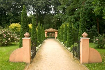 Italian cypress in formal Tuscan garden