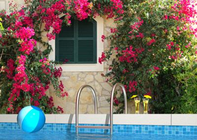 pool with bougainvillea in front of stone wall