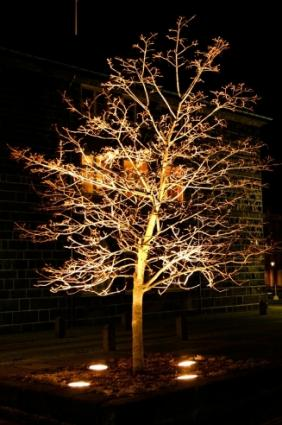 Outdoor landscape lighting ideas lighting for specimen tree workwithnaturefo