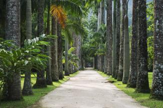 Avenue of royal palm trees at the Jardim Botanico botanic gardens