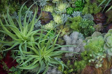 mix of succulents
