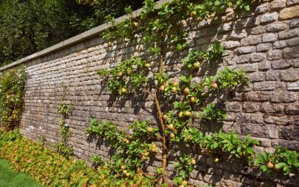 tall garden wall with apple tree - Garden Wall