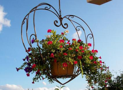 red petunias in hanging basket