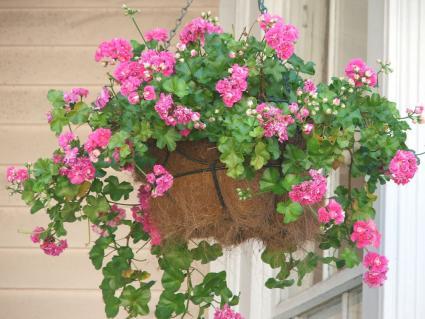 coco coir plant basket