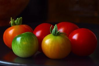 diversity of tomatoes