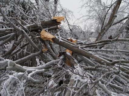snowstorm damage