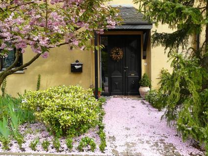 entryway planting