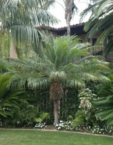 Pygmy Date Palm Image Courtesy Of Jungle Music Palms And Cycads