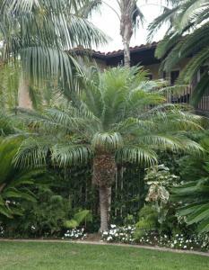 Pygmy date palm - Image courtesy of Jungle Music Palms and Cycads