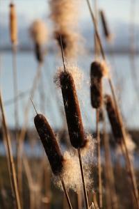 drifting seeds