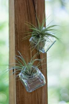 air plant mounting options