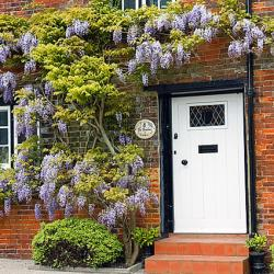 wisteria brick house
