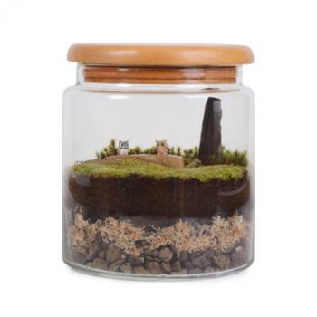 Woodland scene in a jar terrarium
