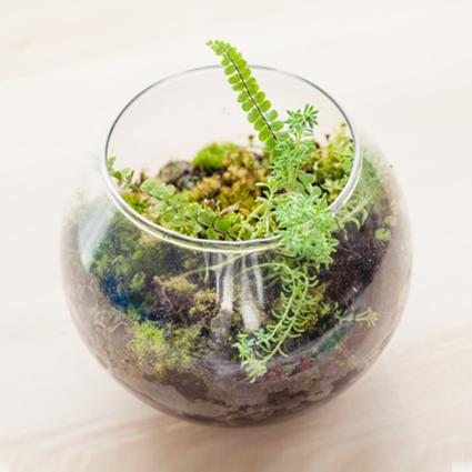 Small ferns in glass bowl terrarium