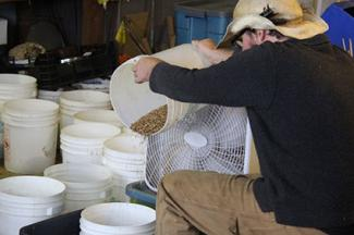 Winnowing seeds using a fan