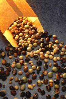 round seeds