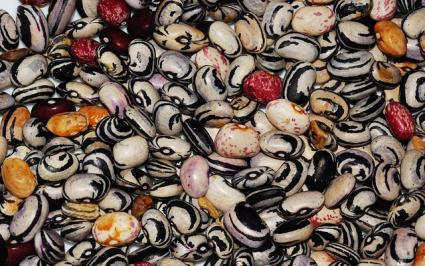 legume seeds