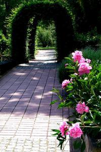 peonies formal garden