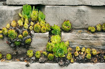 Succulents In Rocky Ledge