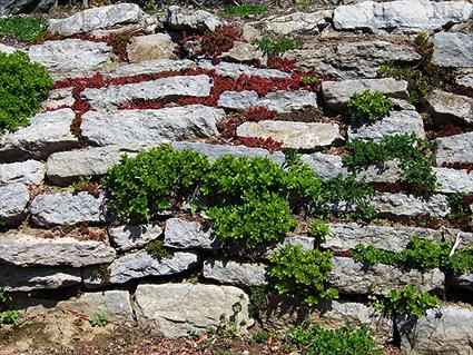 retaining wall with succulents