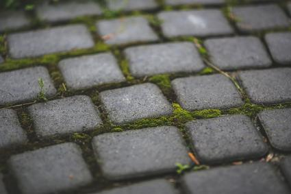moss in landscaping