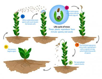 Sexual reproduction in plants seeds