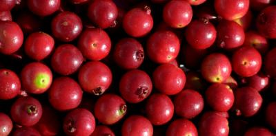 Example of red/pinkish fleshed fruit