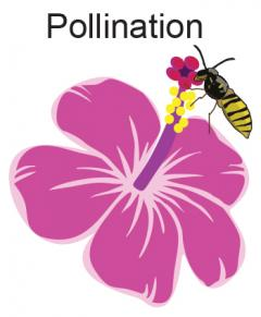 plant pollination