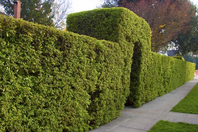 Image result for shrub fence