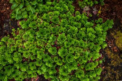 Plants That Thrive In Sandy Soil Lovetoknow