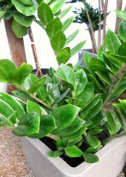 Identifying House Plants | ToKnow on giant leaf plant identification, heart shaped leaf identification, flowering plant identification, big leaf plants identification, indoor cactus plants identification,